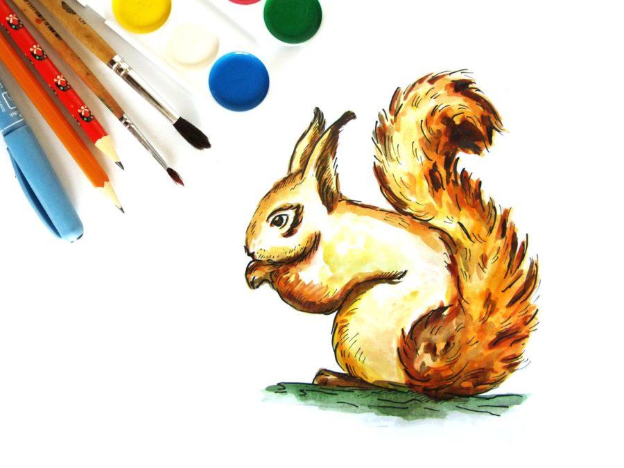 Как нарисовать белку поэтапно