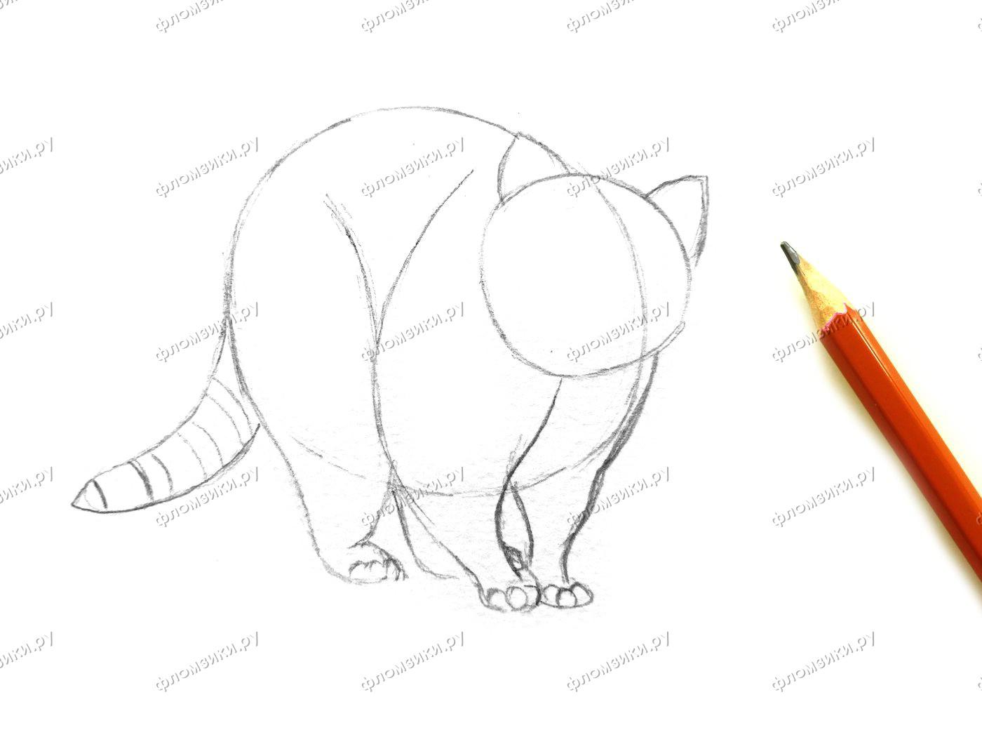 Как нарисовать енота поэтапно