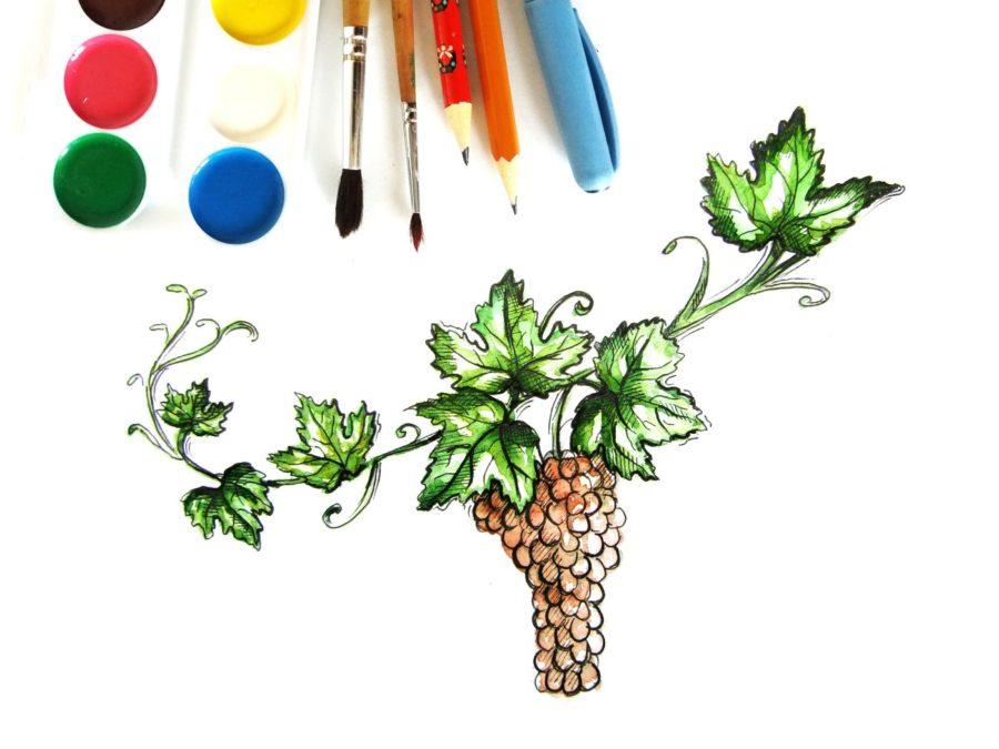Как нарисовать виноградную лозу поэтапно