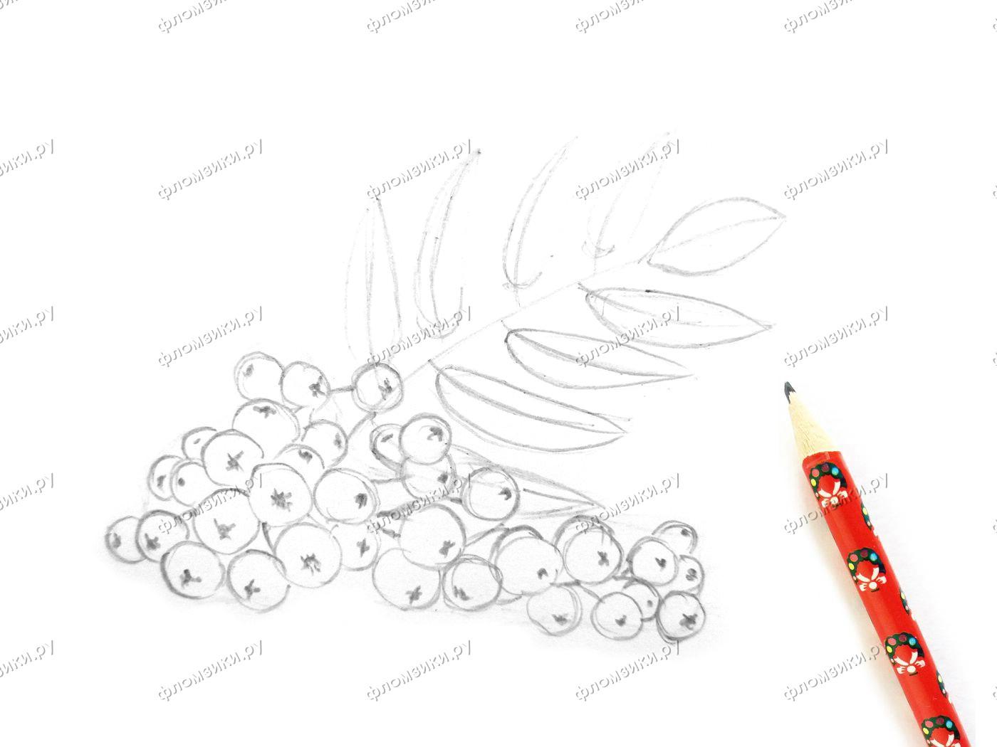 Как нарисовать рябину поэтапно
