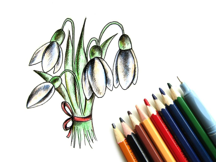 Как нарисовать подснежник карандашами