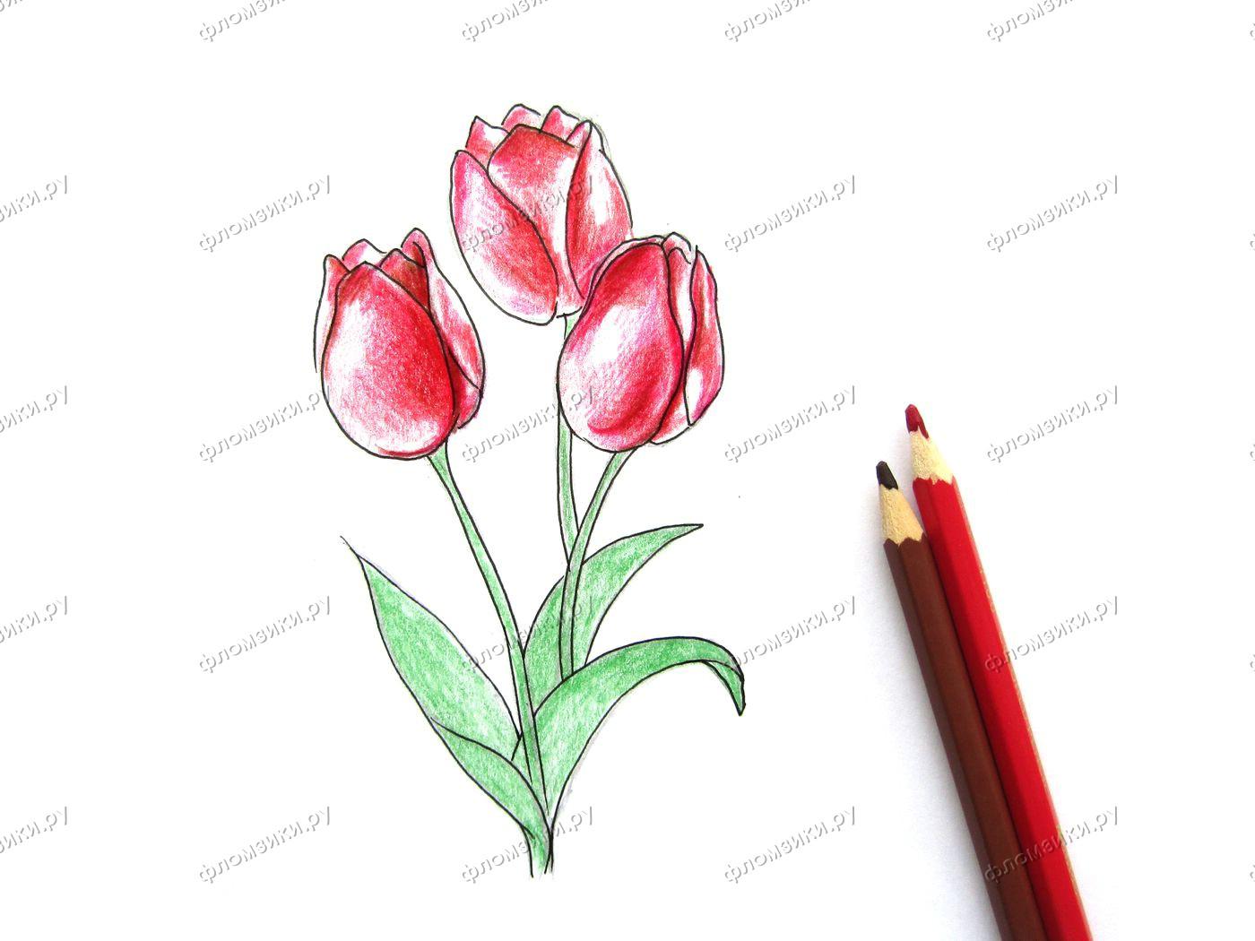 Как нарисовать тюльпан поэтапно карандашами
