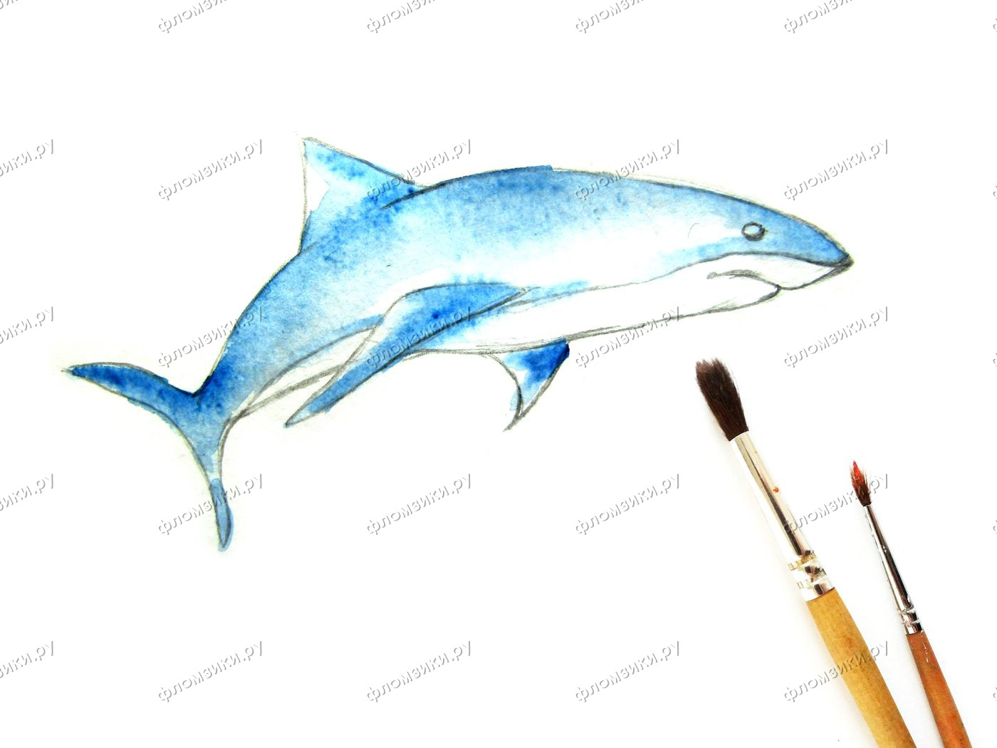 Как нарисовать акулу поэтапно