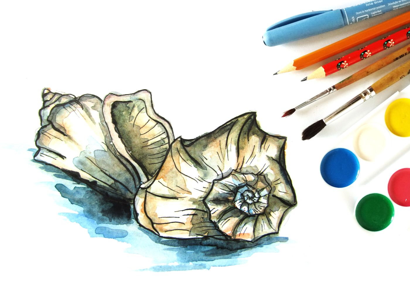 Как нарисовать ракушку поэтапно