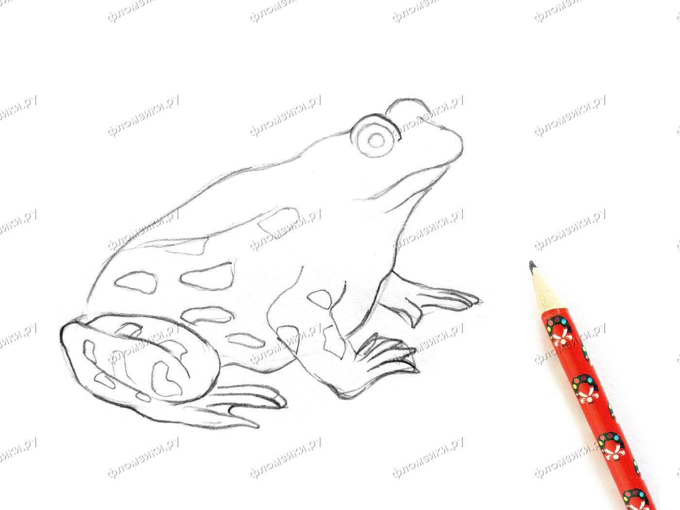 Как нарисовать лягушку поэтапно