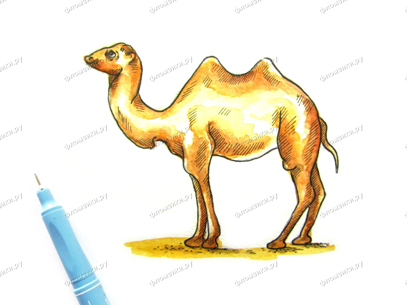 Как нарисовать верблюда поэтапно
