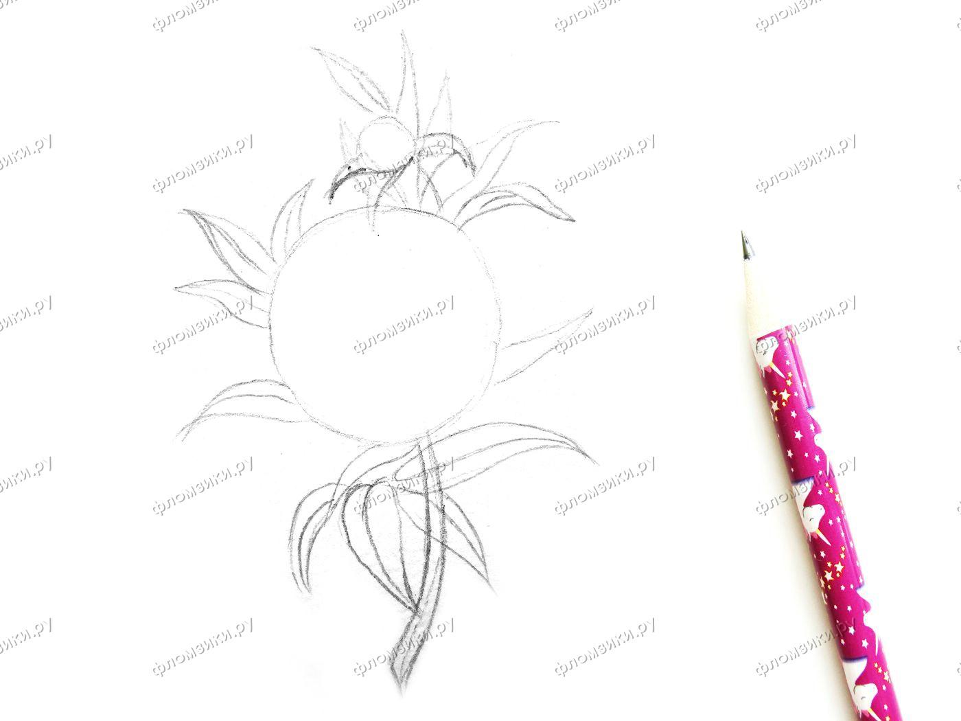 Как нарисовать пион