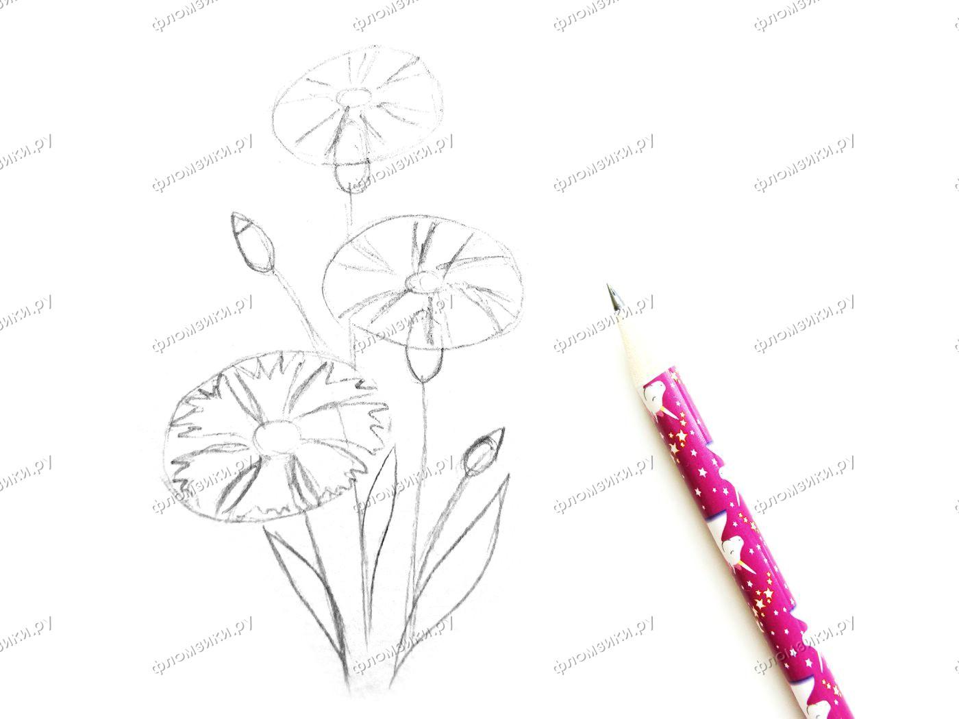 Как нарисовать василёк