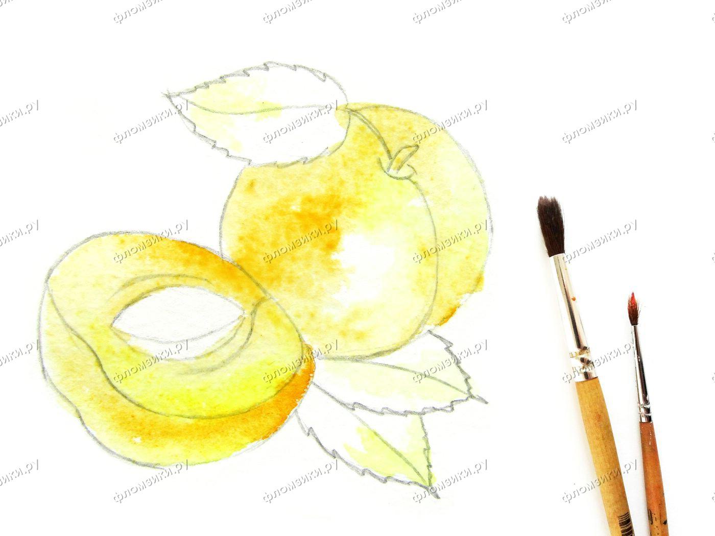 Как нарисовать абрикос